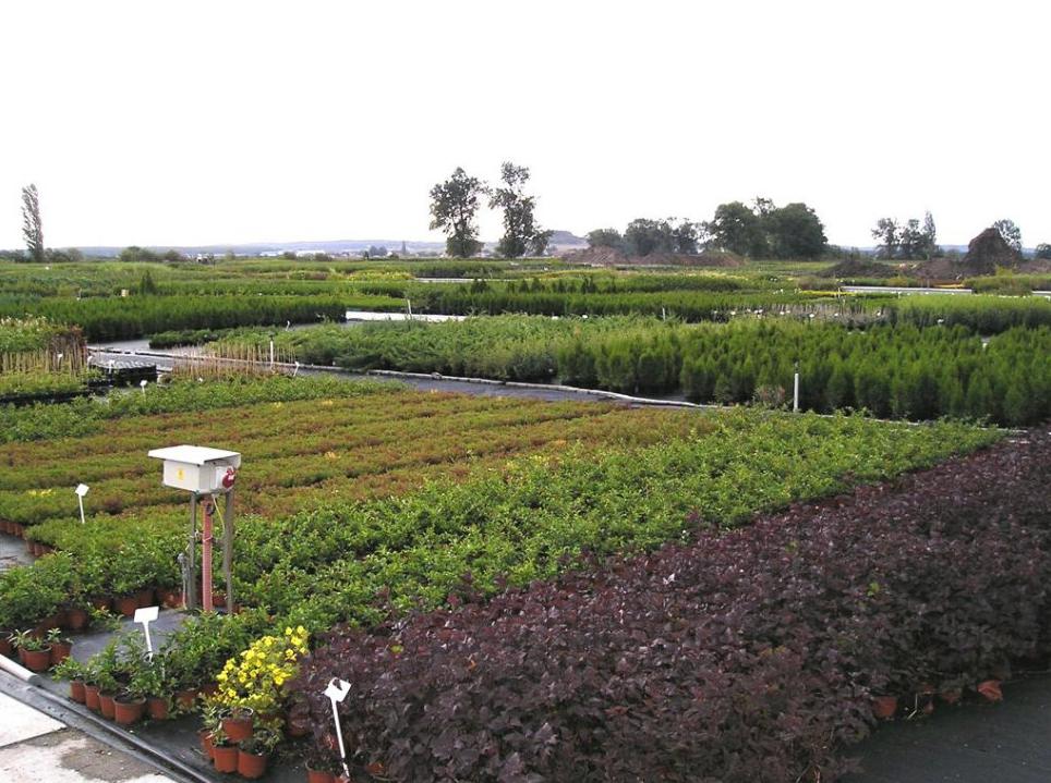 Zahradnictví Školky Montano
