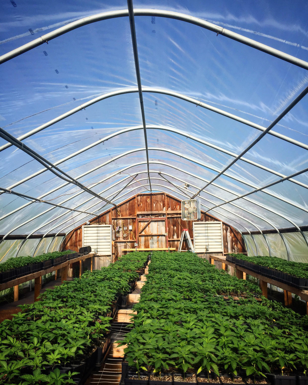 Bordertown Farm