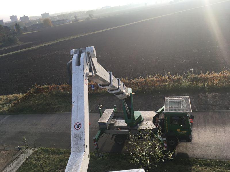 ArborCare·ca Baumdienst / Baumpflege / Seilklettertechnik Bonn