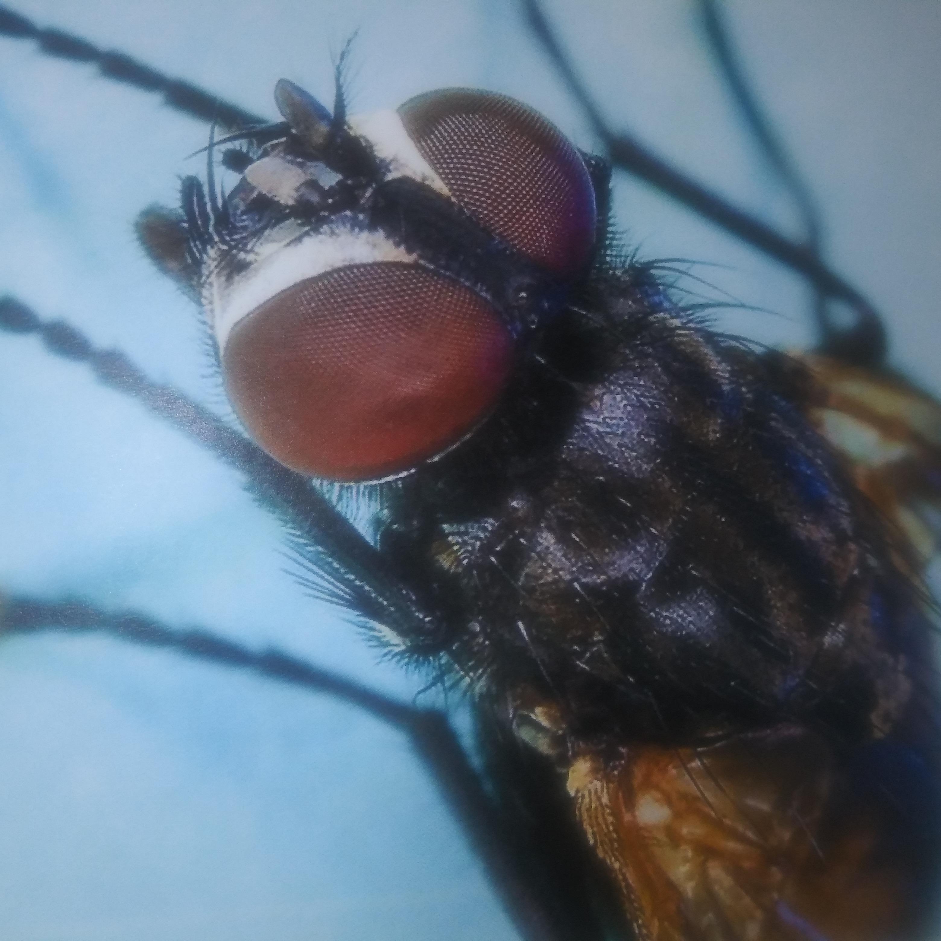 No Survivors Pest Control Company, Inc.