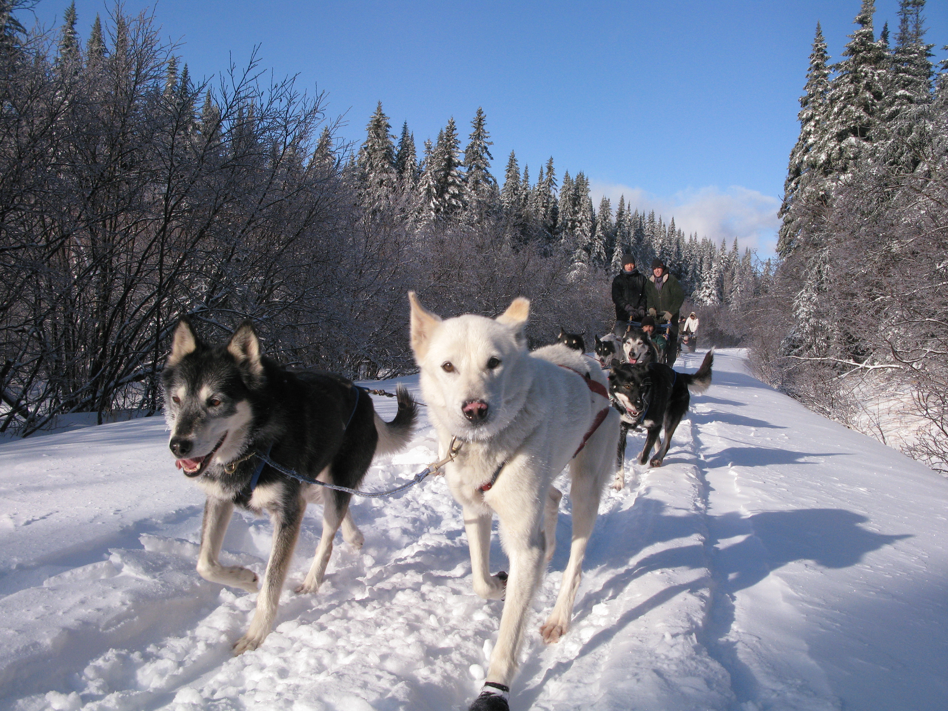 Dog Friendly Hotels In Bethel Maine