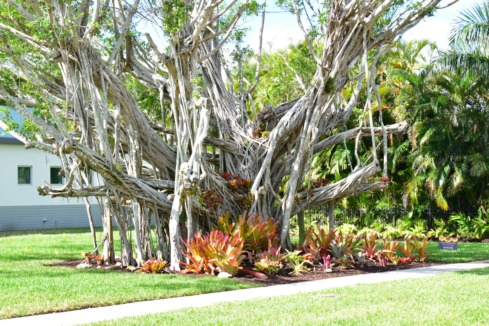 Peer landscaping inc in fort myers fl 33901 for Myers lawn and garden