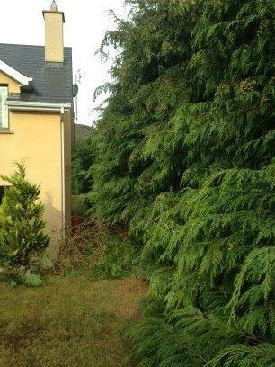 Scanlon Tree Services 4