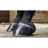 PATRICK  HORSESHOEING - Fallon, NV 89406 - (775)294-5940 | ShowMeLocal.com