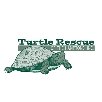 Turtle Rescue Of The Hamptons - Jamesport, NY 11947 - (631)779-3737 | ShowMeLocal.com