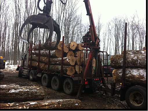 Images Larry Miscio Logging & Firewood Sales