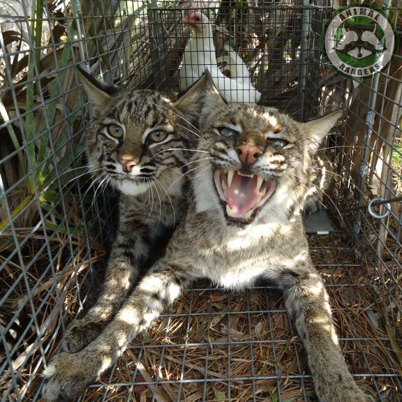 Animal Rangers Inc Port Saint Lucie Florida Fl