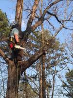Image 2 | Hurt Tree Service