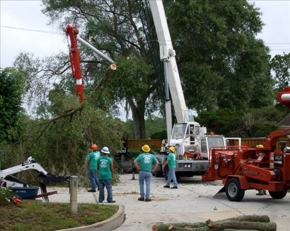 Independent Tree Service Inc image 5