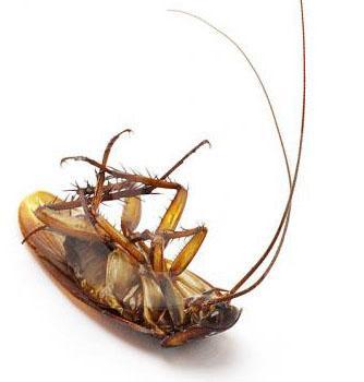 Quality Pest Control Since 1995