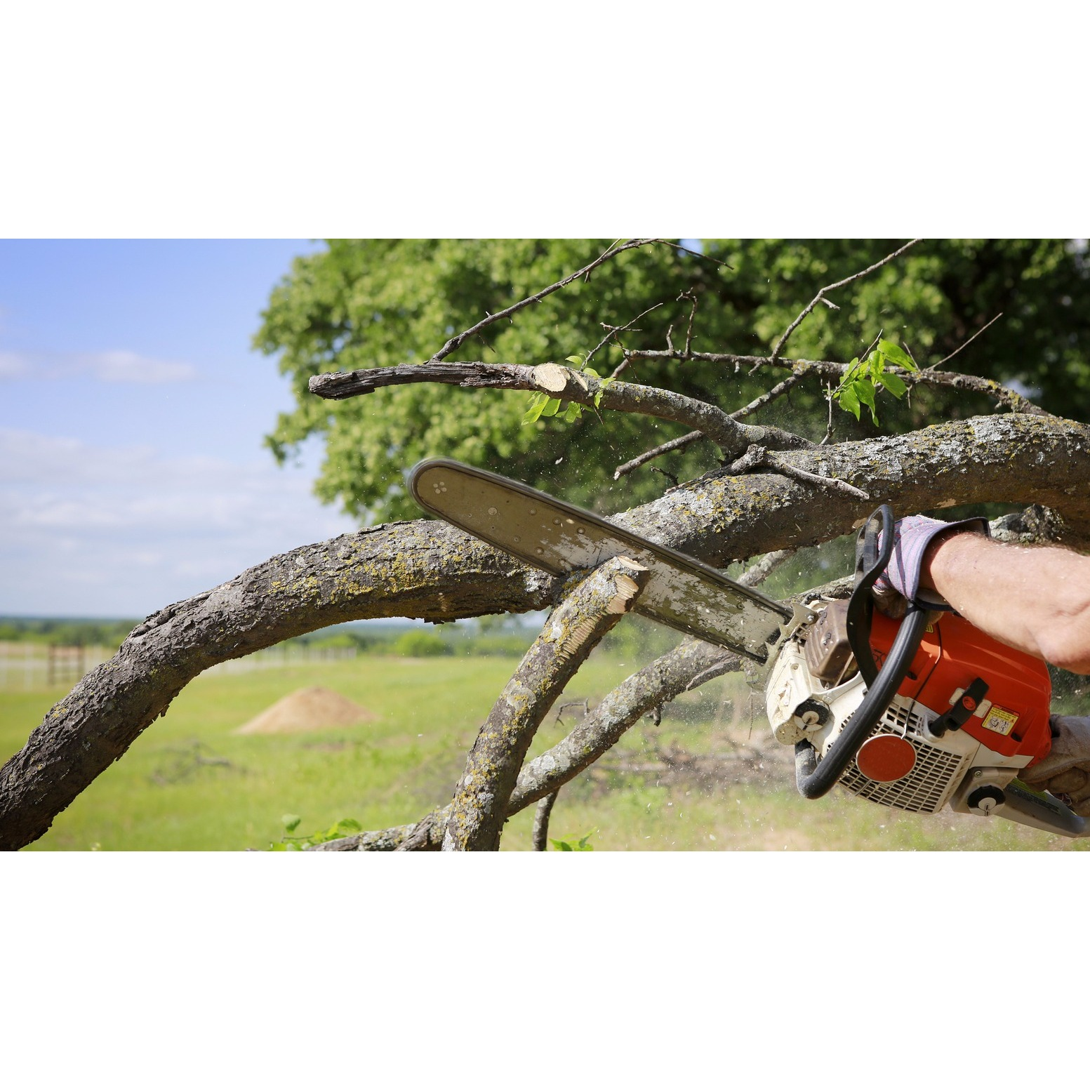 Charlotte Tree Removal Service