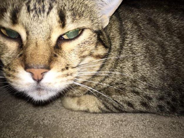 April's-Pet-Care-Pet-Sitting-Scottsdale-AZ-Cat-Care