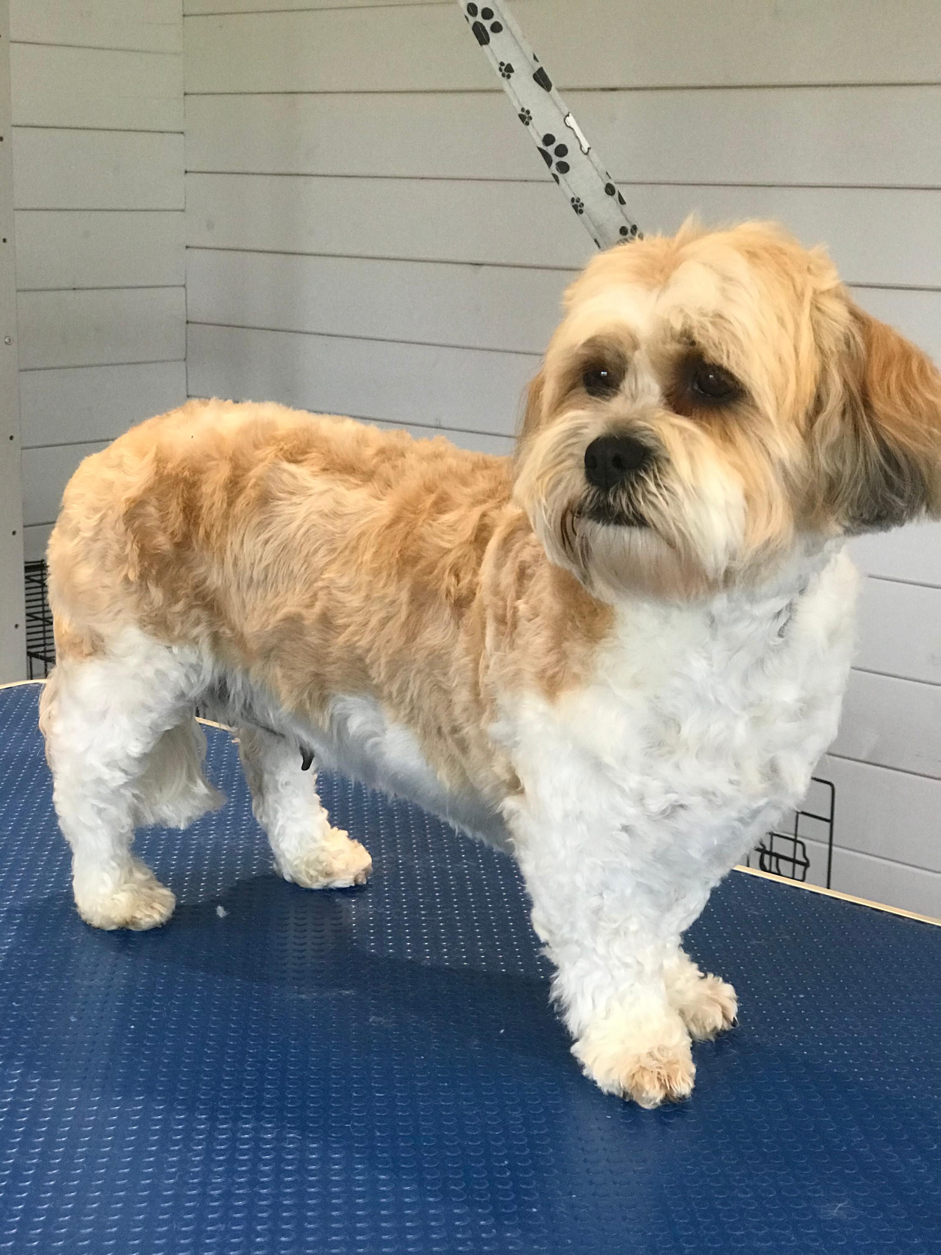 Tatty Tails Dog Grooming