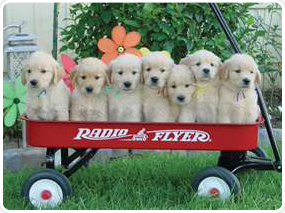 American Dog Club image 0
