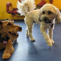 Urban Pooch Canine Life Center