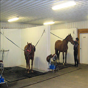 Canterbury Stables image 2