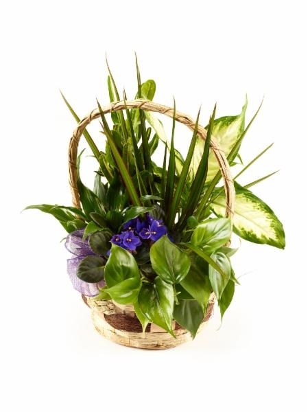 Brant Florist in Burlington: Plant Arrangement Options