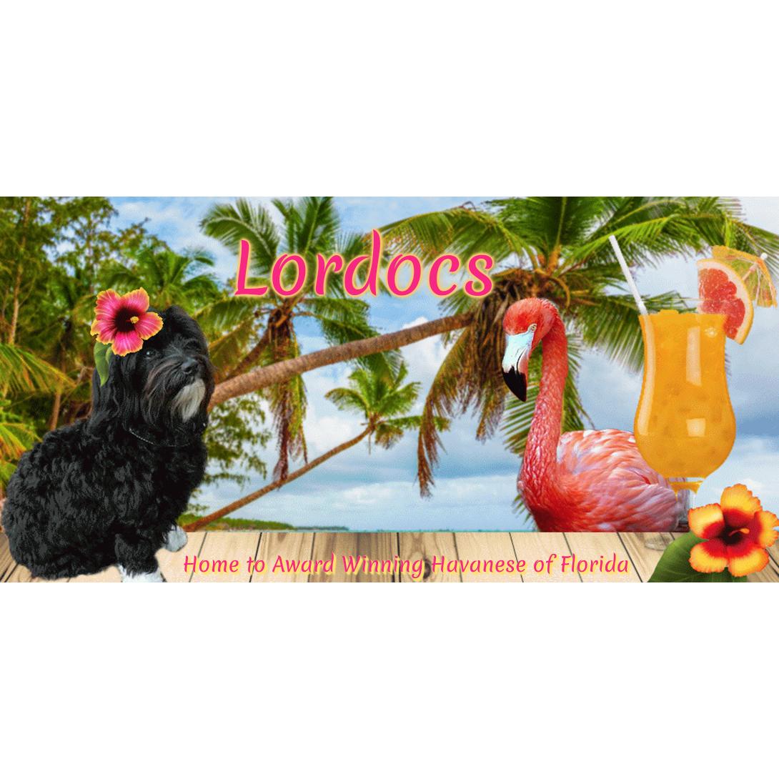 Lordocs Havanese