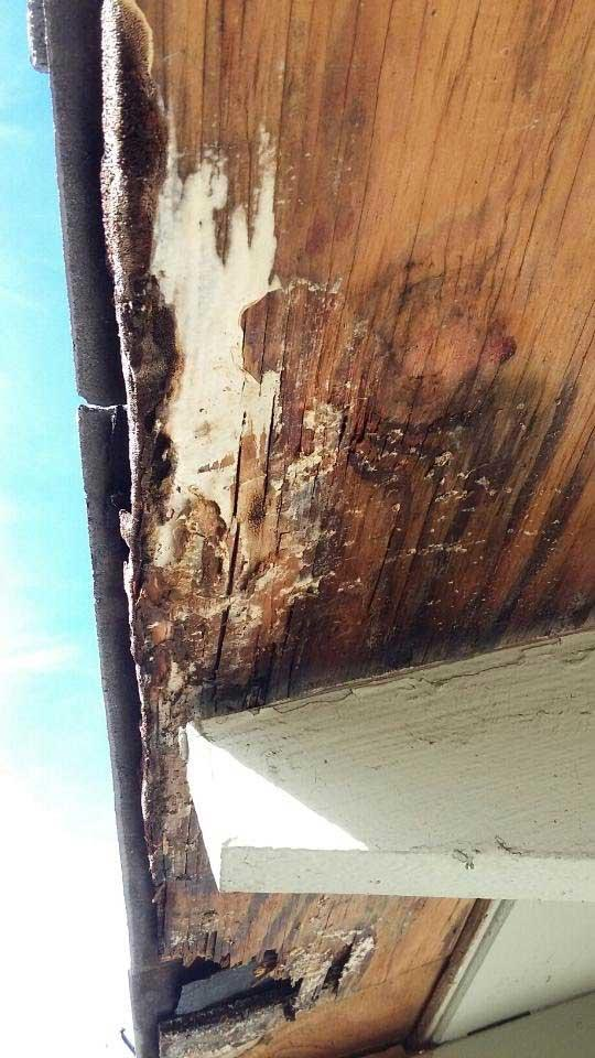 Termite Treatment, Los Angeles