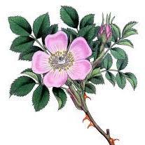Wild Rose Landscape Design