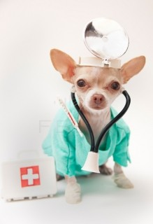 The Animal Clinic P.C.