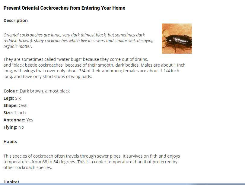 Pest Detective Ltd in North Vancouver: Oriental Cockroaches from Entering Your Home