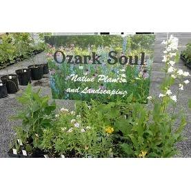 Ozarks Native Landscapes LLC