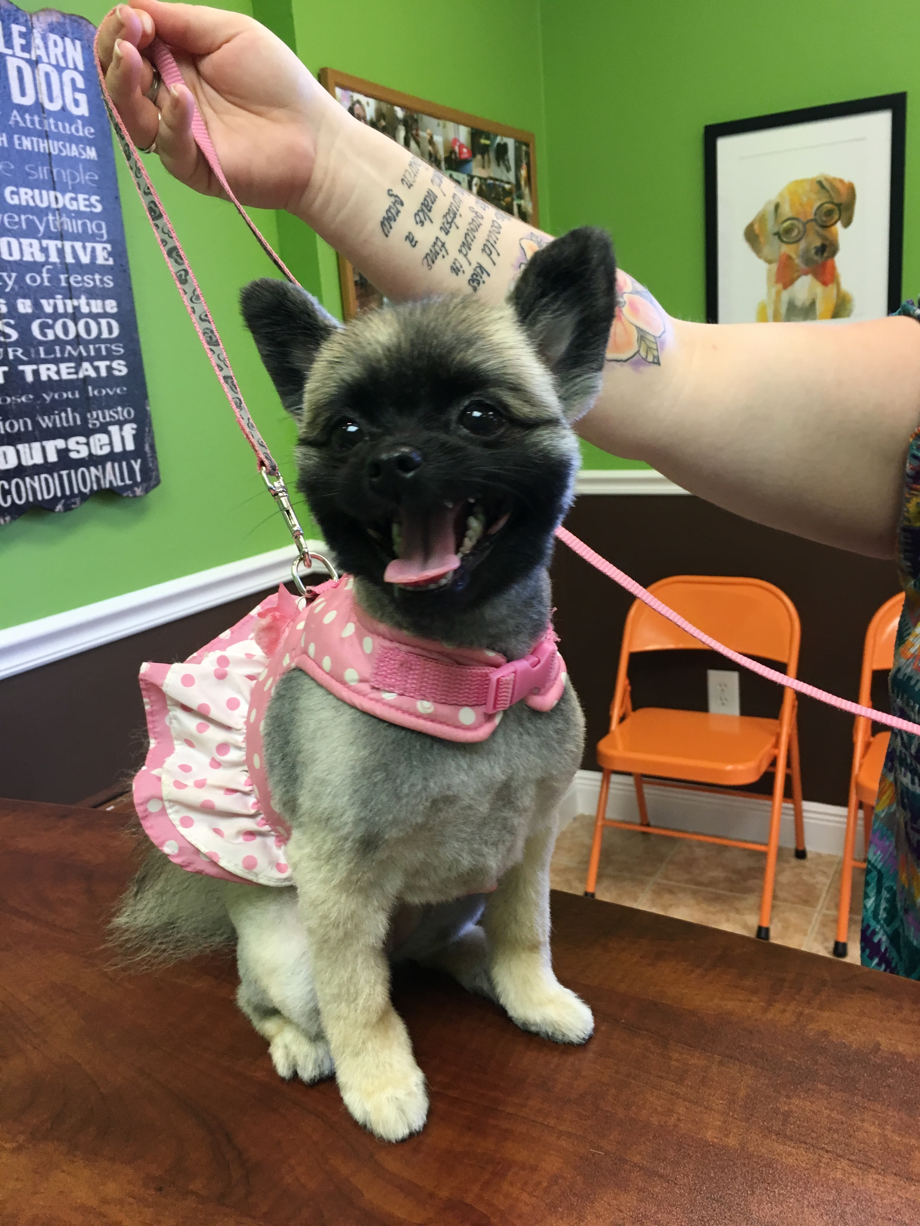 Service Dog Training Naples Fl