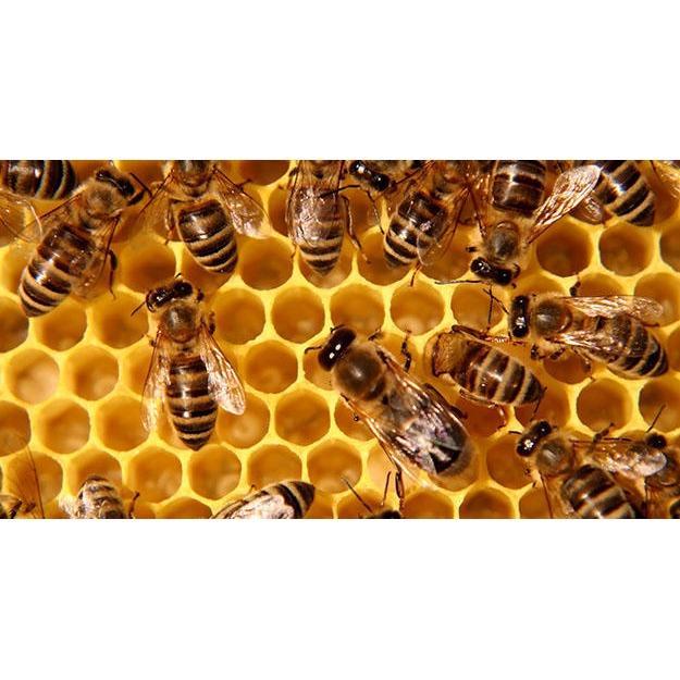 GBU Bee Removal - Midland, TX 79701 - (432)557-8446 | ShowMeLocal.com