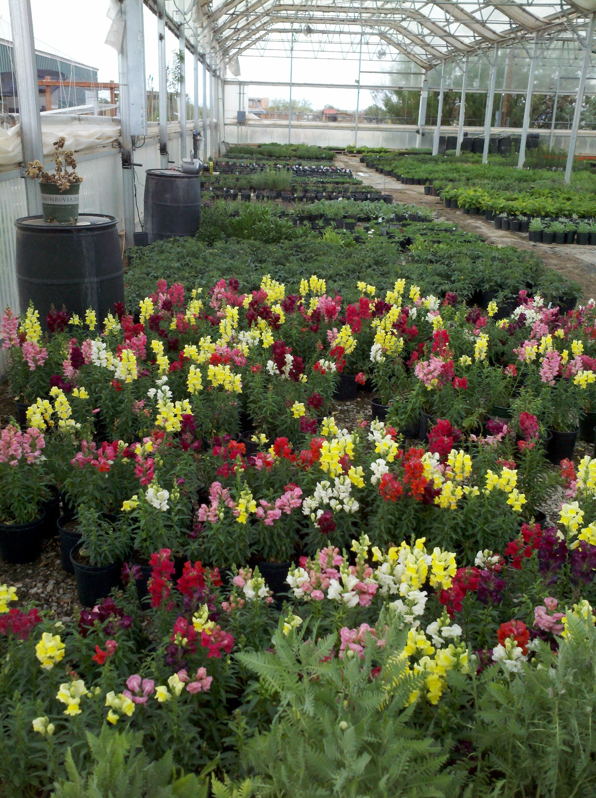 Barela Farms/ Kare-N-Growing Greenhouse