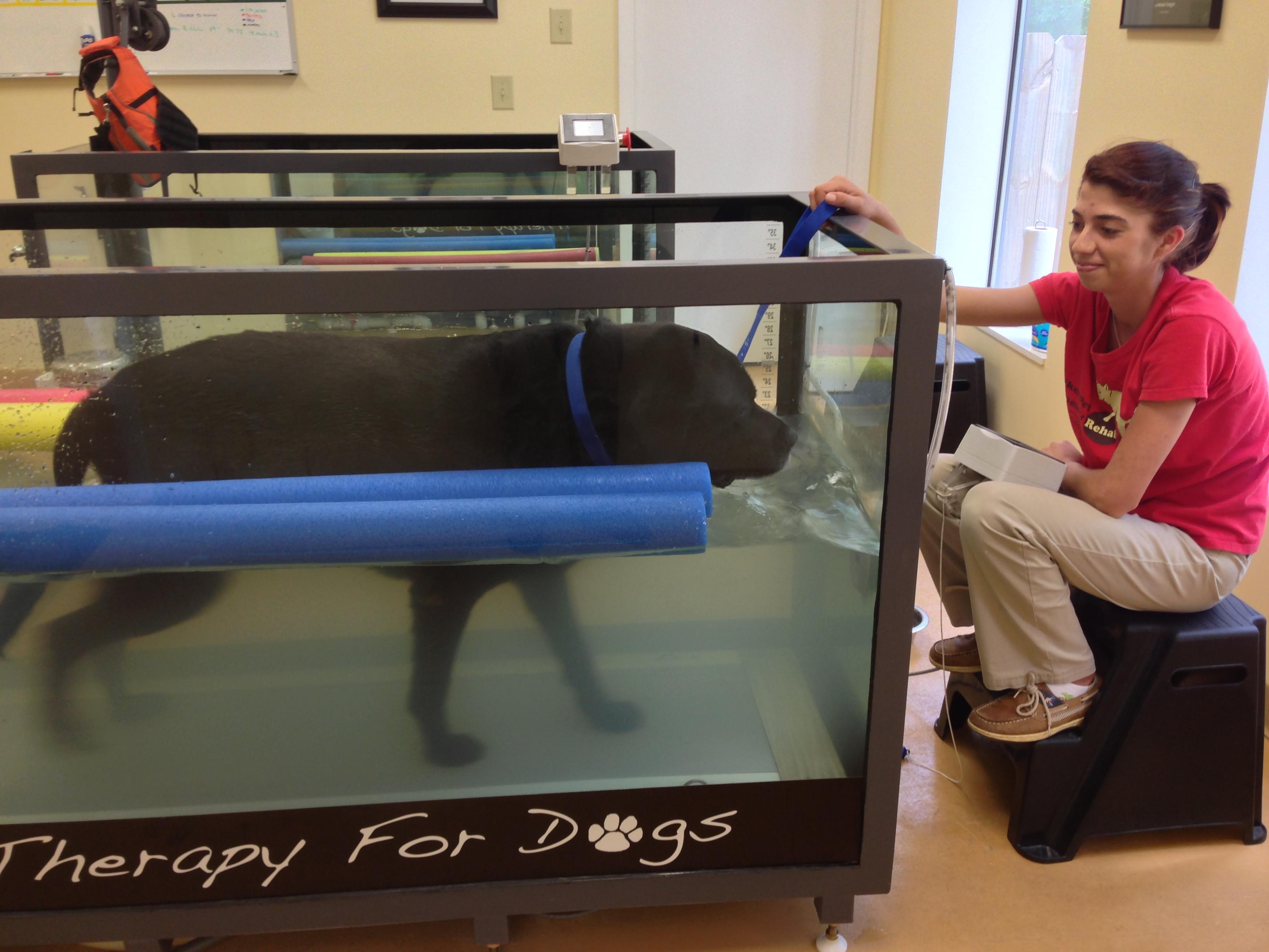 Aiken Pet Fitness and Rehabilitation image 8