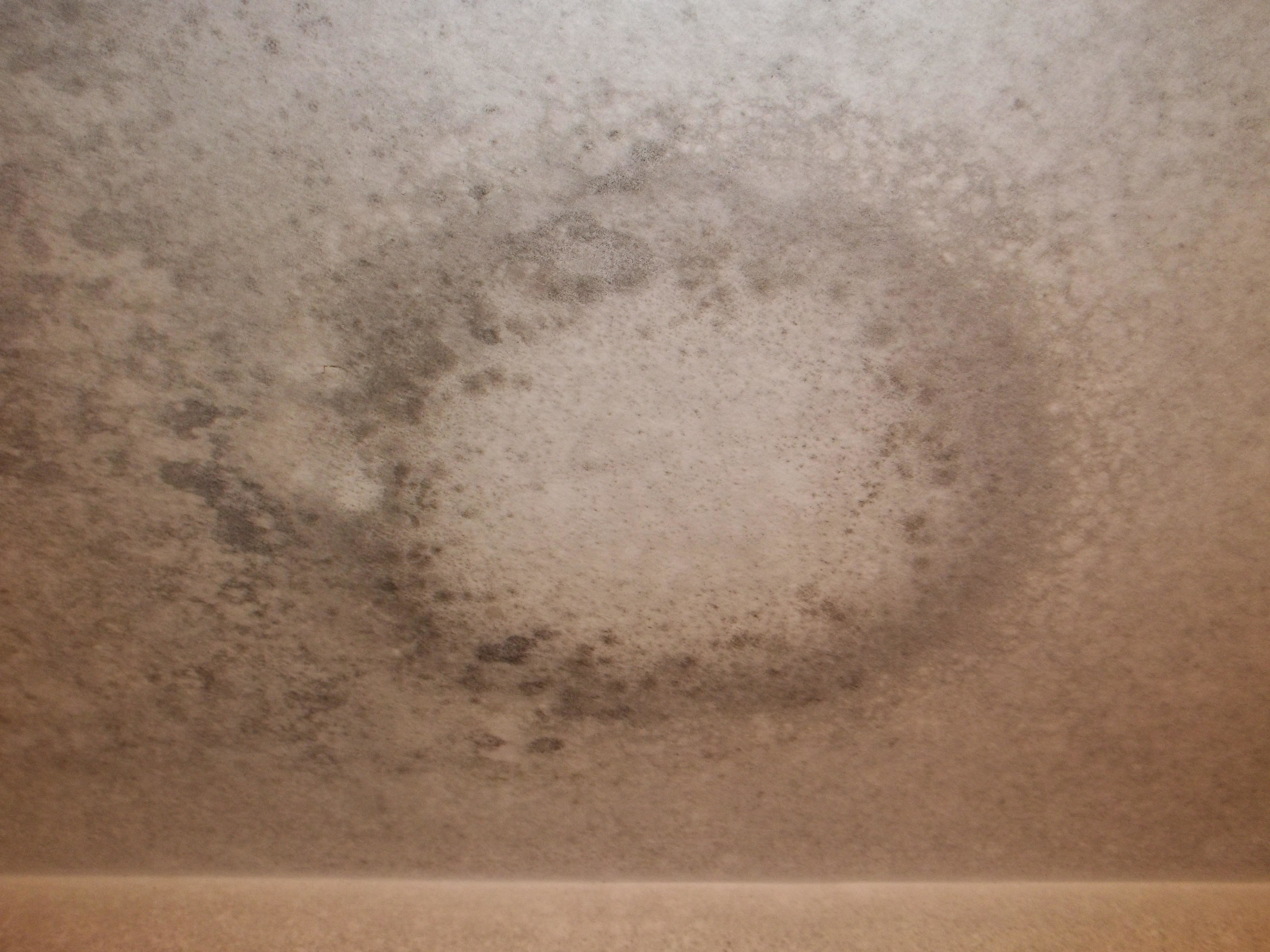 Anderson Restoration & Emergency Services - Water Damage & Mold Remediation image 6