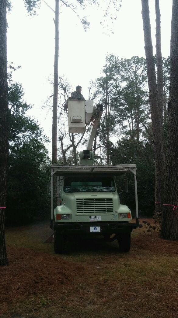 The Arbory Tree Service