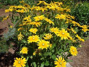 Greenleaf Garden Services image 2