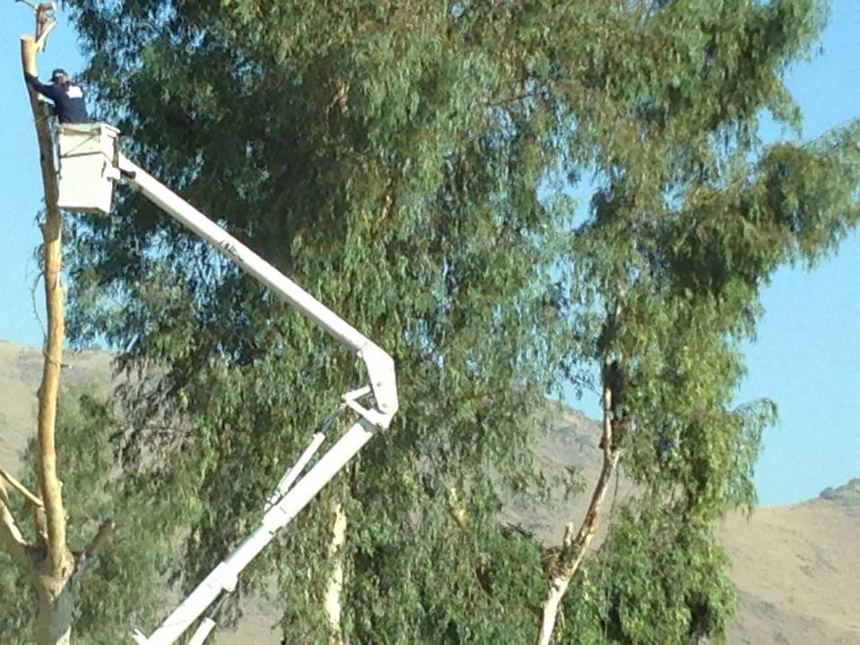 Lawn Care Service in CA Fresno 93723 Adolph's A-1 Tree Service 6325 W Olive Ave  (559)715-1766