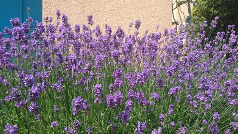 Lavendelpraktijk voor Natuurlijke Zorg