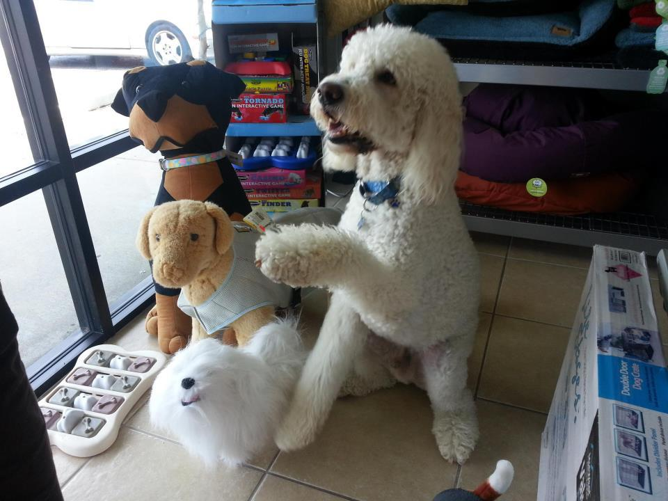 A Natural Pet Pantry is a locally owned family operated business in Osprey, FL. We are a one-stop pet store offering a personalized customer experience to every visitor that walks through our door.