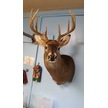 Quiles Taxidermy