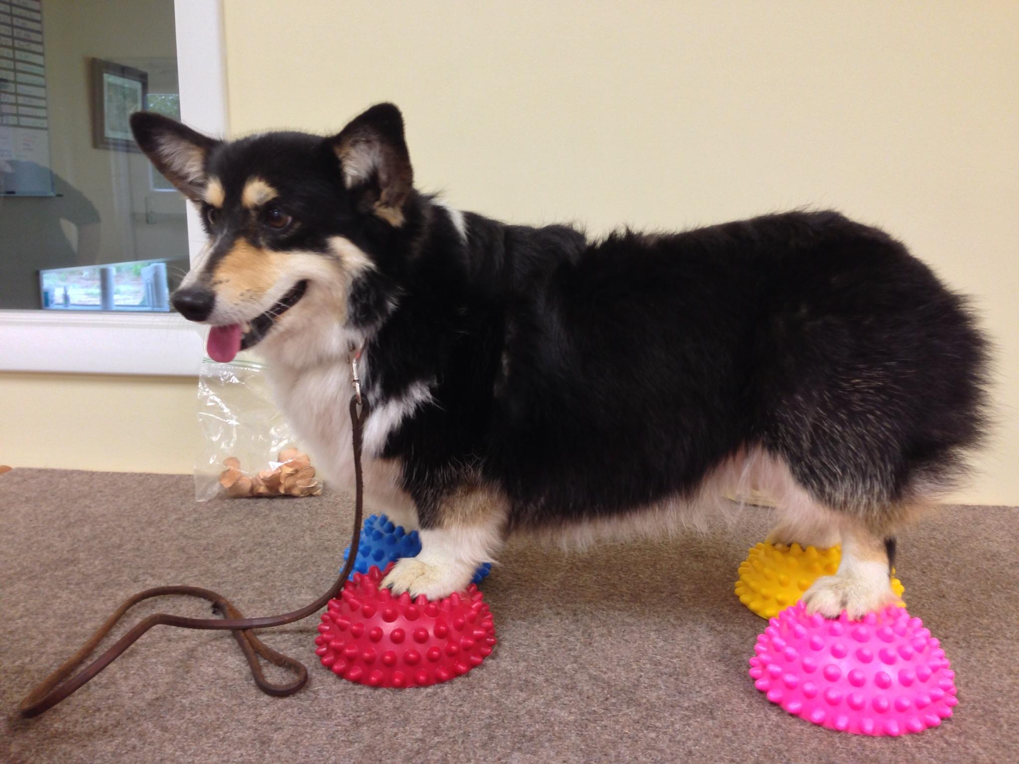 Aiken Pet Fitness and Rehabilitation image 2