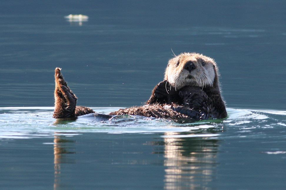 Sea Otter Kayak Tour