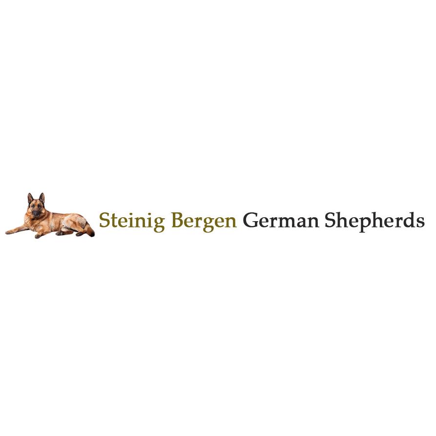 Steinig Bergen German Shepherds