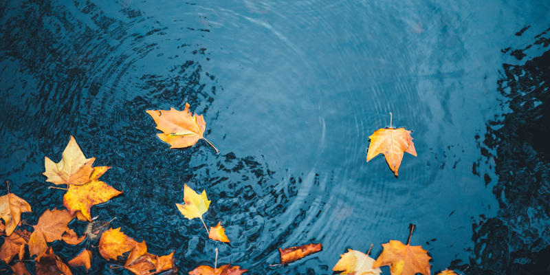 Our pond maintenance services can always ensure a clean and attractive pond.