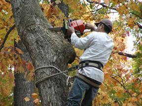Garrett's Tree Service, Inc.