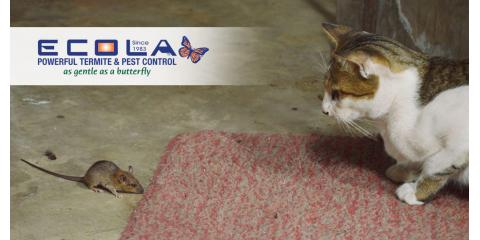 Are Pests Seeking Warmer Quarters – Your Home?