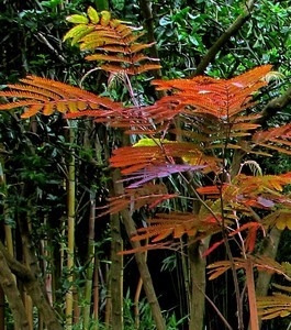 Bamboekwekerij Kimmei