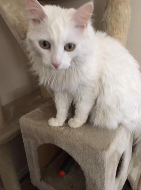 April's-Pet-Care-Pet-Sitting-Scottsdale-AZ-Kitty-Care