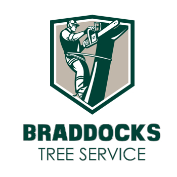 Braddocks Tree Service