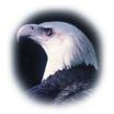 Eagle Transportation - Airport Limousine Service