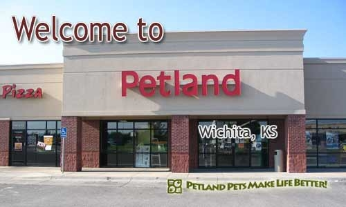 Search results for petland in for Fish stores wichita ks