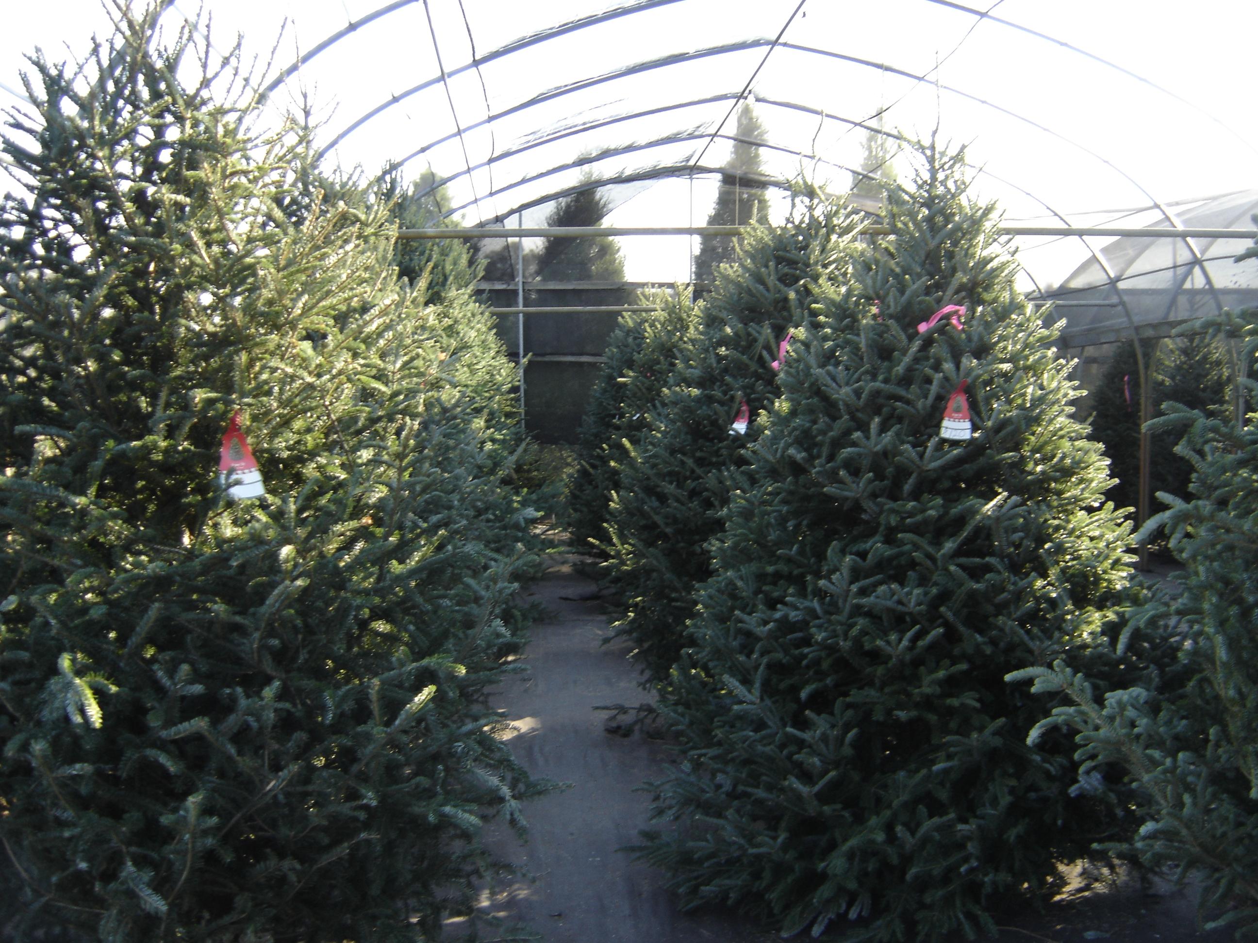 ERGLE CHRISTMAS TREE FARM